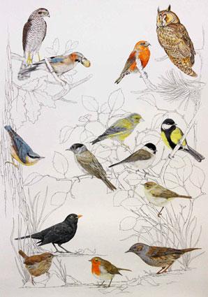 lesní ptactvo / kresba tužkou a pastelkou
