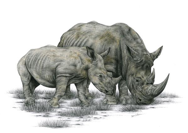 Nosorožec tuponosý / kresba tužkou a pastelkou
