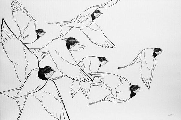 Vlaštovky / kresba tuší / 50 × 75 cm